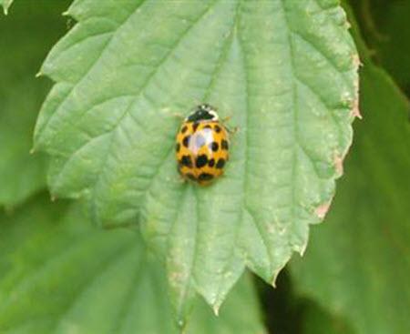 Ladybird1_fp